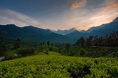 Munnar (a.sutradhar) Tags: sonya7iii tokina1120f28 tokina1120mm munnar landscape sunset hillstation teavalley ngc mirrorless sigmamc11