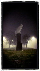 The Owl Statue on Sunday morning (garydlum) Tags: owlstatue publicart canberra australiancapitalterritory australia