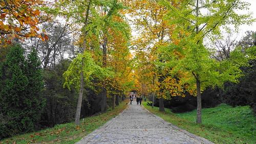 autumn at the Atatürk arboretum. İstanbul,Turkey 🇹🇷