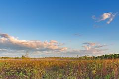 Saint Croix State Park, Minnesota (Tony Webster) Tags: minnesota saintcroixstatepark stcroixstatepark fog foggy morning prairie sunrise wetland wetlands crosbytownship unitedstatesofamerica
