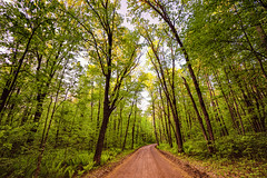 Dirt Road at St. Croix State Park, Minnesota (Tony Webster) Tags: minnesota saintcroixstatepark stcroixstatepark dirtroad morning sky statepark sunrise trees crosbytownship unitedstatesofamerica