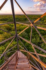 Saint Croix State Park Fire Tower Steps (Tony Webster) Tags: minnesota saintcroixstatepark stcroixstatepark firetower observationtower spring stairs statepark steps trees crosbytownship unitedstatesofamerica
