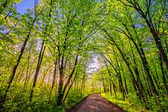 Dirt Road at Saint Croix State Park, Minnesota (Tony Webster) Tags: minnesota saintcroixstatepark stcroixstatepark dirtroad forest green morning road statepark summer sunrise trees crosbytownship unitedstatesofamerica