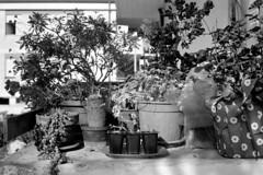 190608 (enricospinozzi) Tags: balcone cucina vasi film analog enricospinozzi