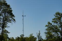 St. Croix State Park Antenna (Tony Webster) Tags: minnesota saintcroixstatepark stcroixstatepark tower antenna communicationstower crosbytownship unitedstatesofamerica