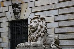 Stone lion (Can Pac Swire) Tags: hamburg germany german deutsche altstadt radhaus townhall city town hall 2019aimg9044 stone lion sculpture bau architektur