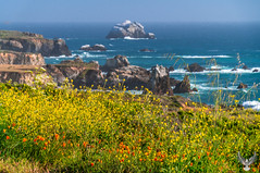 Big Sur Beach California Wildflower Superbloom!  PCH Highway 1 Spring Flowers! Sony A7R II & Sony FE 24-240mm f/3.5-6.3 OSS Lens SEL24240 B Elliot McGucken Fine Art Landscape & Nature Photography! Springtime Flowers Blooming! (45SURF Hero's Odyssey Mythology Landscapes & Godde) Tags: big sur beach california wildflower superbloom pch highway 1 spring flowers sony a7r iii carl zeiss 1635mm f40 wild flower super bloom elliot mcgucken fine art landscape nature photography springtime blooming