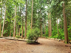 A clearing in the woods (walneylad) Tags: eastviewpark northvancouver britishcolumbia canada park parkland urbanpark woods woodland forest rainforest urbanforest trees logs stump trail ferns moss trunk bark leaves green brown clearing path spring june cloudy scenery nature view