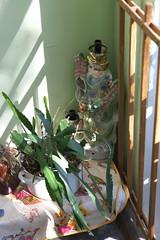 IMG_8628 (Mike Pechyonkin) Tags: 2019 yaroslavl ярославль leaf лист plant растение hallway подъезд лестничная площадка dragon дракон duck утка cactus кактус