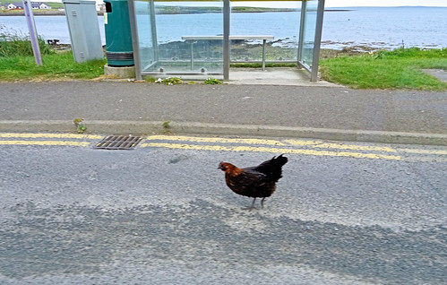 176 | hen at a bus stop