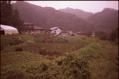 (✞bens▲n) Tags: contax g2 velvia iso50 45mm f2 film slide analogue japan nagano landscape mountains fields flowers