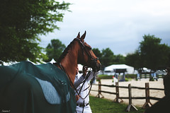 (suzcphotography) Tags: horse show upperville 2019 hunter equestrian northern virginia equine canon 50mm jumper