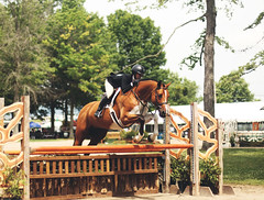 (suzcphotography) Tags: jumper equine