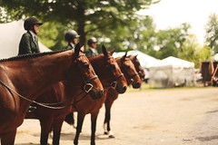 Bays for Days (suzcphotography) Tags: jumper equine