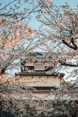 春の歌 (mariannaberno) Tags: sakura cherryblossoms spring japan