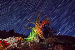 bristlecone pine star trail. 1st star trail photo of the year at this location. (RS2Photography) Tags: treeoftime avatar korra legendofkorra vaatu canon80d canon inyocounty inyo 2019 june2019 california startrax discoverytrail startrails rs2photography naturephotography nature star stars starstax whitemountains ancientbristleconepines bristleconepines bristlecone