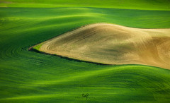 Baseball Diamond Warp (ernogy) Tags: america washington wheatgrass farm green landscape fields palouse ernogy