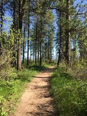 Iller Creek Loop, SPOKANE Washington. Approx. 4.5 miles, 800' vertical rise. (Jayebug) Tags: easternwashington nature trail running illercreek forest summer hike path trailrun spokane
