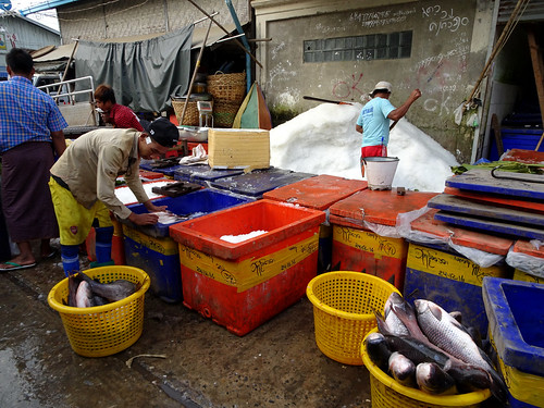 Packing fish in ice for transportation at the Flower Market in Mandalay, Myanmar