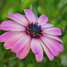 Floral magenta