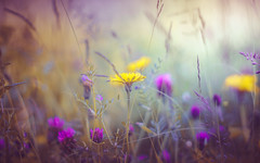 wild flowers (Dhina A) Tags: sony a7rii ilce7rm2 a7r2 a7r eltan elite optics 90mm f22 eltaneliteoptics90mmf22 35mm slide projection projector lens bokeh manualfocus