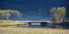 Samdalsvatnet (1) (2000stargazer) Tags: hauglandsdalen hausdalen kalandseid samdalen fana bergen norway river valley morningmist trees bridge mist landscape nature fanaposten canon getty may spring green samdalsvatnet samdalselva