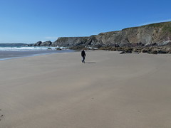 A bustling pembrokeshire beach one weekend in June (daviddb) Tags: albion