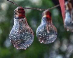 Wet bulbs...After rain (BigWhitePelican) Tags: finland lamps wet water macro hanging canoneos70d adobelightroom6 niktools 2019 june