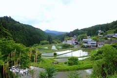 Haibara Morokino Rice Field (Nara Prefecture,Japan) (Rocinante K44) Tags: japan nara haibara udashi rice field