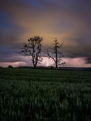 Catching some lightnings (Eifeltopia) Tags: südeifel eifel gewitter blitze thunderstorm flashes lightnings field trees pair lightshow einfangen catching storm sturm sky landscape nature cloudscape