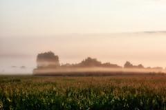 Morning (Staropramen1969) Tags: morning landscape grass sun dawn morgen landschaft gras sonne morgendämmerung matin paysage herbe soleil aube