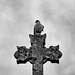 La Croix du Pigeon