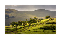 Kirkland leaps (Ade G) Tags: animals landscape nature wildlife light mountains plants sheep trees