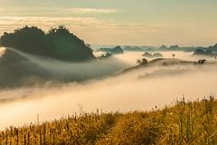 _J5K9046.0110.Tân Lập.Mộc Châu.Sơn La (hoanglongphoto) Tags: landscape nature morning sky mountain clouds vietnam sơnla mộcchâu tânlập phongcảnh thiênnhiên buổisáng bầutrời mây núi canon canoneos1dsmarkiii canonzoomlensef70200mmf28lisusm asia asian sierra dãynúi sườnnúi mountaintop đỉnhnúi thunglũng thunglũngmây hill hillside đồi sườnđồi sunlight sunnymorning nắng nắngsớm nắngbuổisáng plant cây thựcvật hilltree đồicây ridge ngọnđồi dãyđồi flanksmountain scenery vietnamlandscape vietnamscenery northernvietnam northwestvietnam tâybắc mocchaulandscape vienamesenature thiênnhiênviệtnam mâytânlập mâymộcchâu valleyofclouds valley
