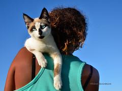 Super ...cette épaule ! (Hélène Quintaine) Tags: chat épaule dos personnage people fille femme perché poil regard carnivore félin mammifère patte bretelle abigfave nikonpassion