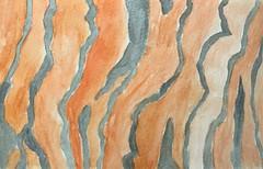 """Bark Detail"" (communicatingcreativelydj) Tags: communicatingcreatively cotman watercolour watercolor watercoloursketch watercolorsketch bark trunk tree abstract lines shapes texture watercolorsketchaday watercoloursketchaday"