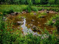 Rainwater pond (cizauskas) Tags: rain garden georgia pond path decatur reclamation citypark urbanpark park flower blossom bloom wildflower