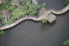 Orlando, Florida (EEUU). (hiniestalópez) Tags: orlando florida eeuu estadosunidos unitedstates pantano caimanes alligators turismo