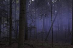 purple fog (afx.works) Tags: forest nature cinematic dark fog purple moody surrealistic