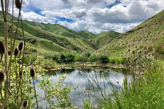 IMG_2349 (Doug Goodenough) Tags: bicycle bike cycle pedals spokes ebike trek powerfly 97 hells canyon snake river grande ronde oregon 2019 19 june spring drg531 drg53119 drg53119p drg53119plpoint dirt showers vista views sun clouds