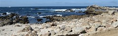 Monterey Peninsula, CA, 17-Mile Drive, Seascape (Mary Warren 13.6+ Million Views) Tags: landscape seascape pacificocean water montereypeninsula 17miledrive nature rocks stones