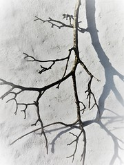 Fragment (Julie Rutherford1 ( off/on )) Tags: abstract shadow twig branch wall julie rutherford