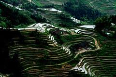 湖南紫鵲界 (廖醫師個人影集) Tags: china asia terracedfields nikon green light