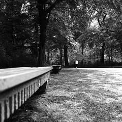 In the Park (ucn) Tags: rolleiflex35b mxevs tessar75mmf35 park dof lightgreenfilter