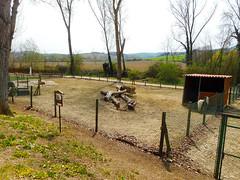 Ponies (Going to the Zoo with Trebaruna) Tags: leowildpark collevalenzazoo collevalenzafattoriadidattica zoo enclosures enclosure italy italia 2019 02042019