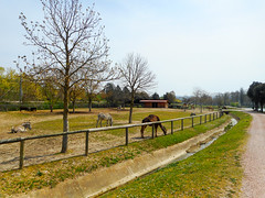 Dromedary, ostrich, grevy zebra (Going to the Zoo with Trebaruna) Tags: leowildpark collevalenzazoo collevalenzafattoriadidattica zoo enclosures enclosure italy italia 2019 02042019