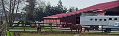 Mare and foals (D70) Tags: mare foals truck barn tractor washington usa edison unitedstates stitched