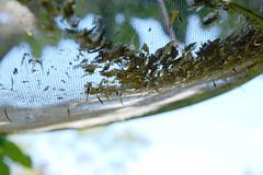 Seedhoop Seed Catcher 546 (Donna's View) Tags: nikon d3300 seedhoop birdseed seed hoop tree