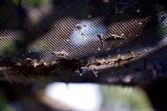 Seedhoop Seed Catcher 544 (Donna's View) Tags: nikon d3300 seedhoop birdseed seed hoop tree