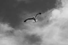Seagull flying through the clouds in the Sky over Chalkida on June 5, 2019 (X-Andra) Tags: geek greece summer bird cloud clouds gull harbor island sea seagull sky sun weather chalkida centralgreece